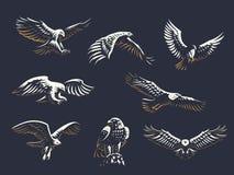 Комплект орлов вектора бесплатная иллюстрация