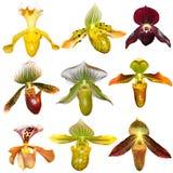 комплект орхидеи Стоковое фото RF