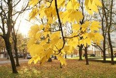 Комплект осени с ветвями дерева и листьев Стоковое Изображение