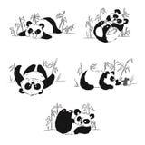 Комплект панд играя в бамбуке Стоковая Фотография