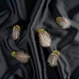 Комплект пера Турции фазана на черной silk предпосылке стоковое изображение