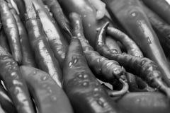 Комплект перцев горячего chili в конце вверх Мексиканские пряные перцы длинной формы Предпосылка перцев chili Стоковые Изображения