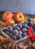Комплект плодоовощ зрелых яблок и черносливов в коробке металла Стоковое Изображение