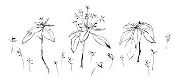 Комплект полевых цветков Изображение вектора покрашенное чернилами Иллюстрация нарисованная шайкой бандитов Стоковые Фото
