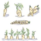 Комплект при покрашенные изображения моркови сделанные в стиле минимализма и p бесплатная иллюстрация