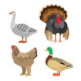 Комплект птицы иллюстрация штока