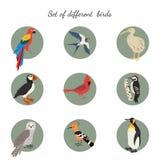 Комплект птиц на белой предпосылке иллюстрация вектора
