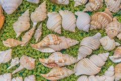 комплект различных раковин моря на зеленой предпосылке Стоковое Фото