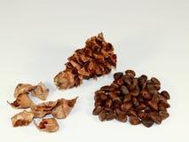 Комплект различных частей сломленного конуса кедра Стоковая Фотография
