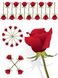 комплект розы красного цвета картины Стоковые Изображения RF