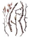 Комплект ручек и хворостин с листьями Стоковые Фото