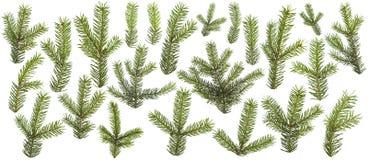 Комплект свежих зеленых изолированных ветвей сосны Стоковая Фотография RF
