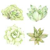 Комплект составов акварели сделанных из суккулентных цветков Стоковые Фотографии RF