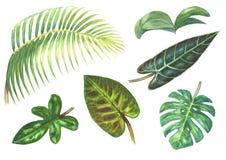 Комплект тропических экзотических заводов бесплатная иллюстрация