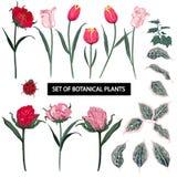 Комплект тюльпана лета цветет с зацветая садом флористическим, botani бесплатная иллюстрация