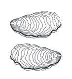 Комплект устрицы Изолированная устрица на белой предпосылке Стоковое Фото