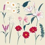 Комплект флористической поздравительной открытки с зацветая садом цветет бесплатная иллюстрация