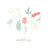 Комплект флоры и листва Стоковое Изображение RF