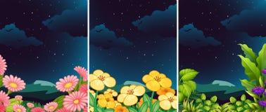 Комплект цветка в природе на ноче Стоковые Фотографии RF