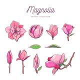 Комплект цветка магнолии Рука вектора нарисованная ботанические 7 иллюстрация вектора