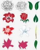 комплект цветка Стоковая Фотография