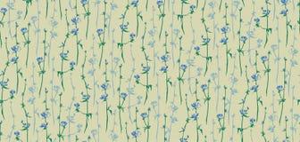 Комплект цикория Картина цветка вектора безшовная Нарисованная рукой трава succory Стоковые Изображения