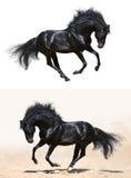 Комплект - черный жеребец в движении Стоковое Изображение