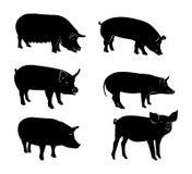 Комплект черных силуэтов свиньи Стоковая Фотография