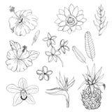 Комплект экзотических цветков и трав Стоковая Фотография