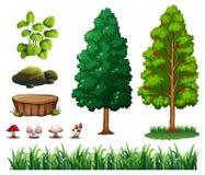 Комплект элемента леса Стоковое Изображение