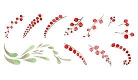 Комплект элементов от пуков красных ягод и листьев Стоковое Изображение RF