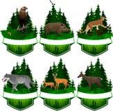 Комплект эмблем полесья вектора с хряком орла, волка, пумы, оленей и борова иллюстрация штока