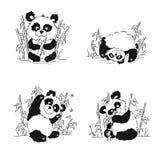 Комплект эскизов с новичком панды Усаживание панды, еда, играя Стоковые Изображения