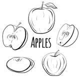 Комплект яблок различных форм Стоковые Фото