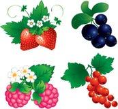 комплект ягоды Стоковое Изображение