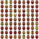 комплект ladybug Стоковые Изображения RF