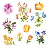 Комплект pansies акварели маленьких изолированных на белизне Стоковые Фотографии RF