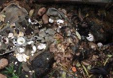 компост стоковое изображение