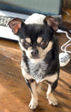 компьтер-книжка собаки компьютера Стоковая Фотография RF