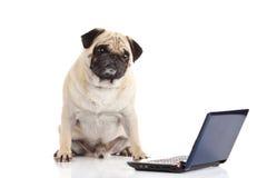 Компьютер собаки мопса изолированный на белой предпосылке Стоковые Фотографии RF
