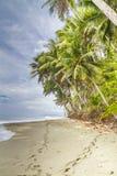 2 комплекта следов ноги на тропической ладони окаимили пляж Стоковое Изображение