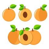 Комплект абрикосов красочный Стоковые Изображения