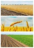 Комплект аграрных полей поля весны и лета Стоковые Фото