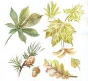 Комплект акварели листьев Стоковая Фотография