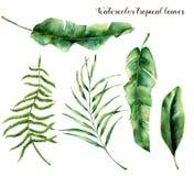 Комплект акварели с тропическими листьями Вручите покрашенные ветвь, папоротник и лист ладони магнолии Троповый завод изолированн иллюстрация штока