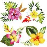 Комплект акварели с тропическими листьями и цветками, букетами Стоковое фото RF