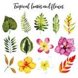 Комплект акварели с тропическими листьями и цветками Стоковые Изображения RF