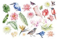 Комплект акварели с тропическими листьями, цветками и птицами Illustra Стоковые Изображения RF
