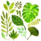 Комплект акварели с тропическими листьями Элемент вектора для вашей конструкции Стоковые Изображения RF