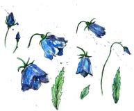 Комплект акварели флористический Стоковые Фото